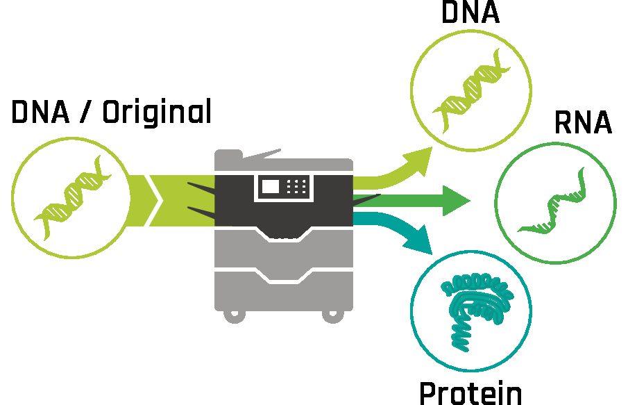 BioCopy: Ein Schweizer Start-up revolutioniert die Entwicklung neuer Impfstoffe